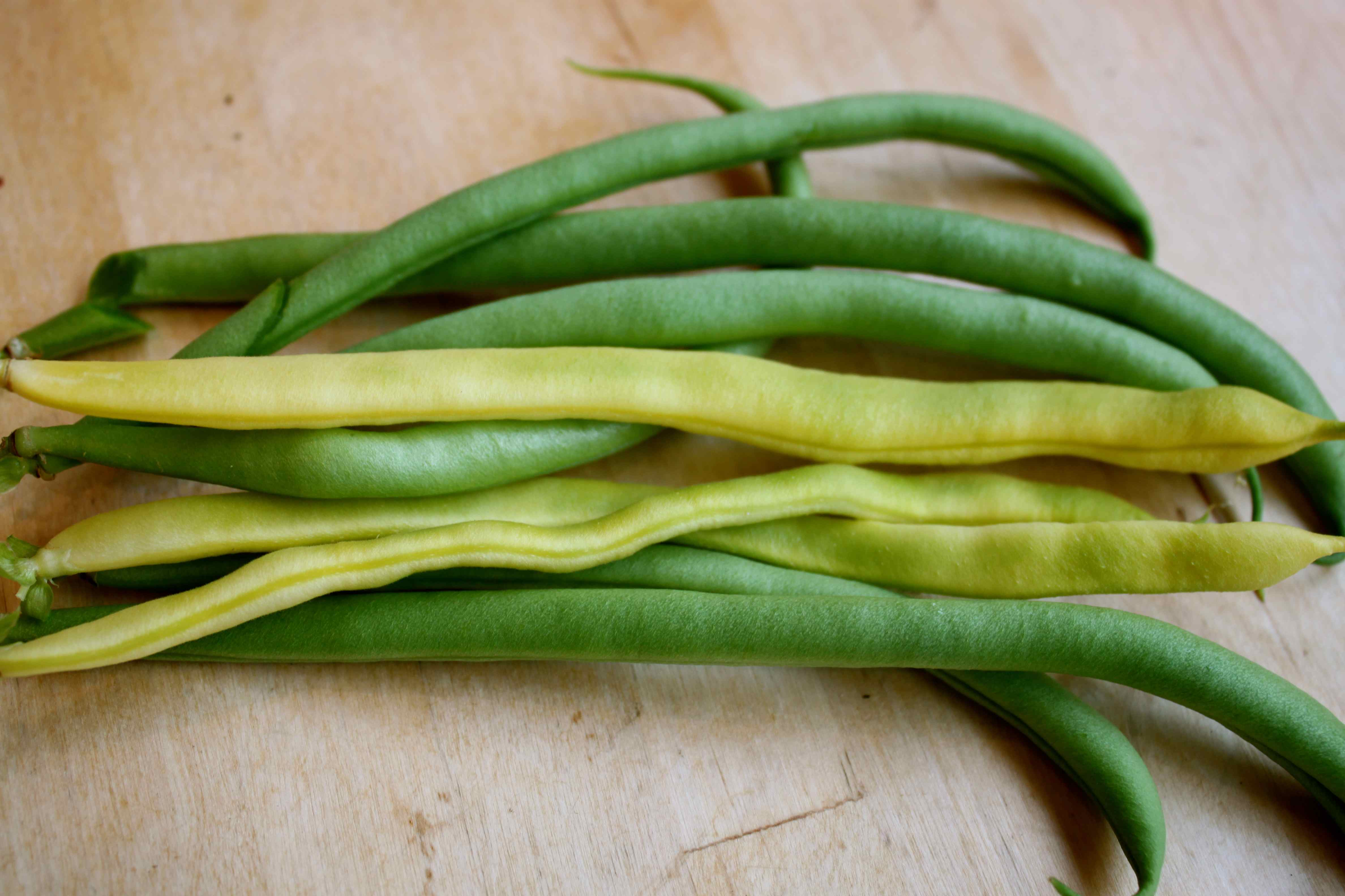 dog lose weight green beans photo - 1