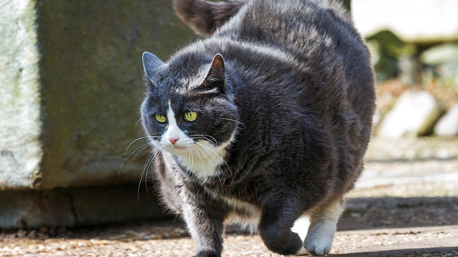 get cat to lose weight photo - 1