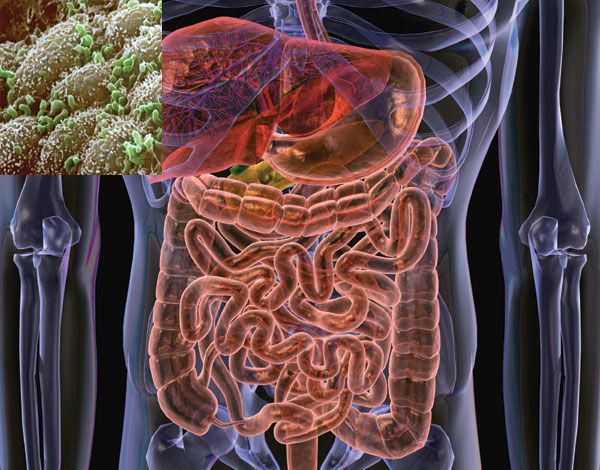 how to change gut bacteria to lose weight photo - 1