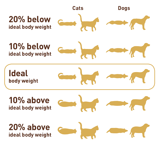 how to get my cat to lose weight photo - 1