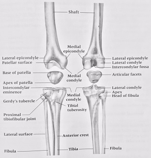 how to lose weight with a knee injury photo - 1