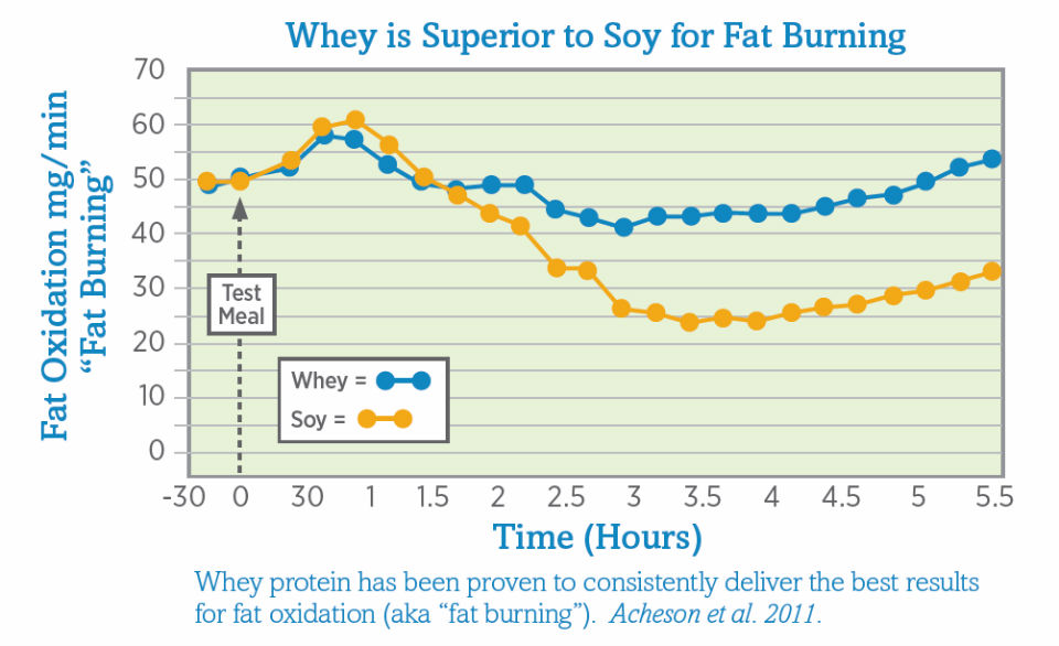 using whey protein to lose weight photo - 1